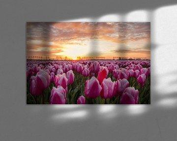 Sonnenaufgang am Tulpenfeld auf Goeree Overflakkee von Ilya Korzelius