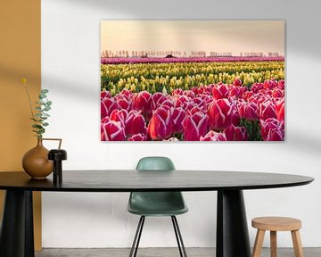 Tulipes au lever du soleil sur Ilya Korzelius