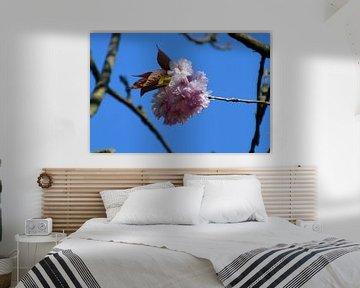 Strauß Kirschblüten von FotoGraaG Hanneke