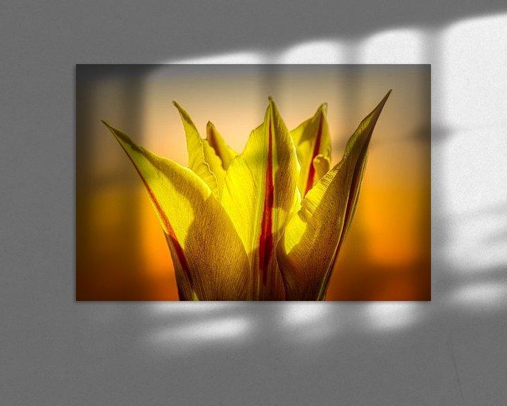 Sfeerimpressie: kroontjes Tulp van Dick Jeukens