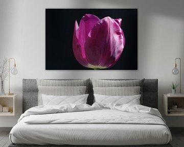 Tulpe von Remko van der Hoek- Zijdemans