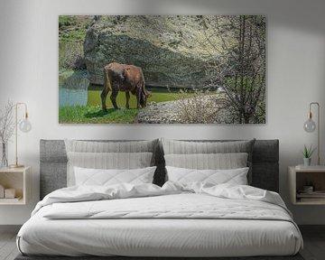Einsame Kuh.... von Roland's Foto's