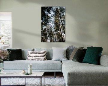 Forêt de pins sur la Veluwe | Pays-Bas / Hollande sur Trix Leeflang