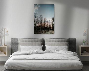 Boslandschap tijdens zonsondergang | Veluwe, Nederland (Holland) van Trix Leeflang