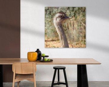 struisvogel kop van Cindy van der Sluijs