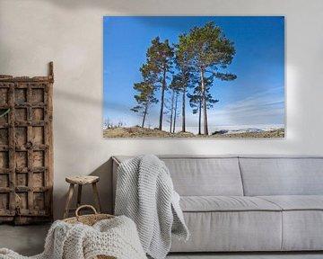 Krachtige pijnbomen reiken naar de blauwe hemel tegen de achtergrond van het met sneeuw bedekte Baik van Michael Semenov