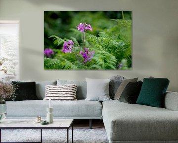 Lila Blumen in Grün von Luci light