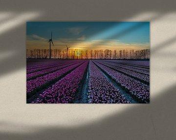 Zonsondergang bij de tulpenvelden van Meindert Marinus
