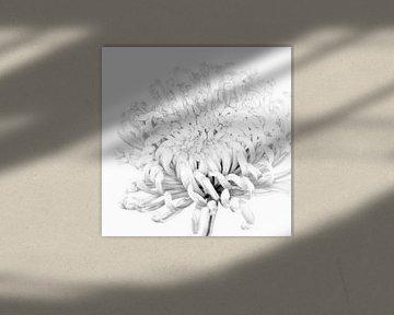 """""""High key"""" Blume schwarz/weiß 2 von Albert Mendelewski"""