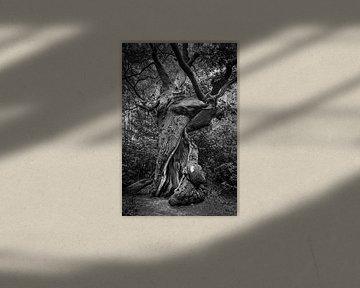 Der alte Baum von Rob Boon