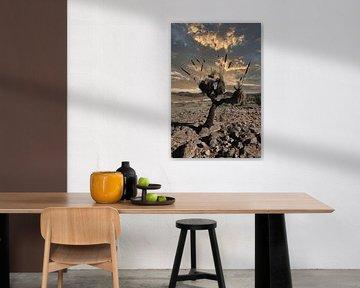 Cactus van Frank Dotulong
