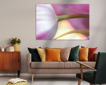 Tulpe Ausschnitt von Augenblicke im Bild