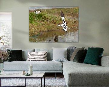Hollandse Vogels