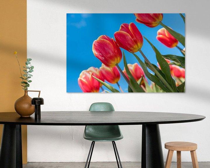 Impression: Tulipes rouges et jaunes sur Elly Damen