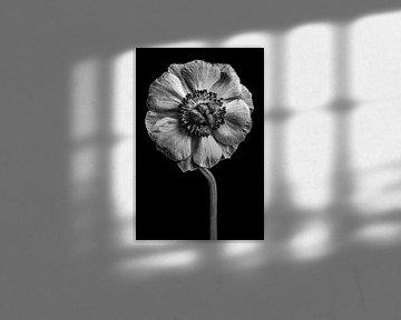 Anemone Schwarzweiß von Steffen Sebastian Schäfer