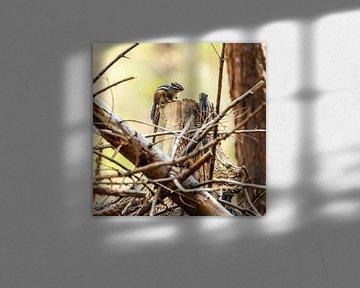 Sibirisches Erdhörnchen 2 von Rob Smit