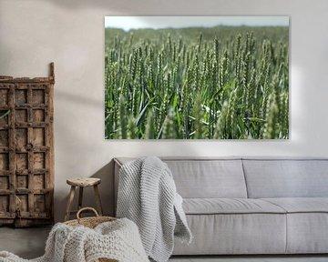 Ein Weizenfeld von Marvin Taschik