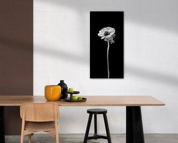 Kronen-Anemone | dunkles Design von Melanie Viola