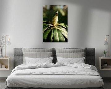 botanisches Fine Art Poster einer Blütenknospe, des Rhododendrons von Karijn | Fine art Natuur en Reis Fotografie