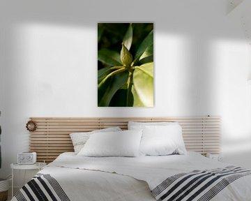 botanisches Foto der Grünpflanze Rhododendron im Sonnenlicht von Karijn | Fine art Natuur en Reis Fotografie