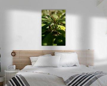 botanische Aufnahme einer Grünpflanze, des Rhododendrons von Karijn | Fine art Natuur en Reis Fotografie