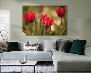 Rode Tulpen van Gerard Burgstede
