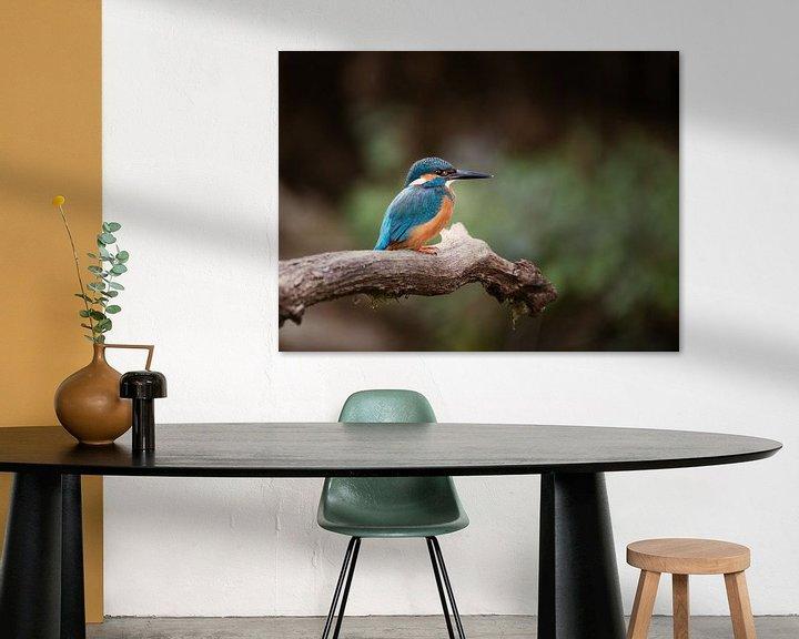 Sfeerimpressie: Close-up van IJsvogel op tak in Nederlandse natuur van Maarten Oerlemans