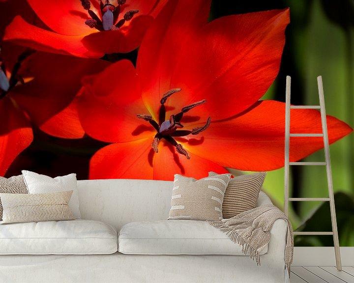 Beispiel fototapete: Rote Blume scharf von Martijn Tilroe