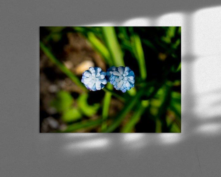 Sfeerimpressie: Blauwe druifjes van Martijn Tilroe