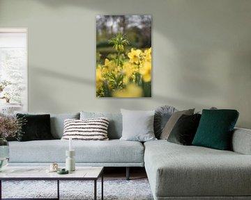 Gelbe Fritillaria von Lisette van Gameren