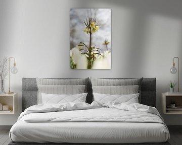 Hellgelbe Fritillaria von Lisette van Gameren
