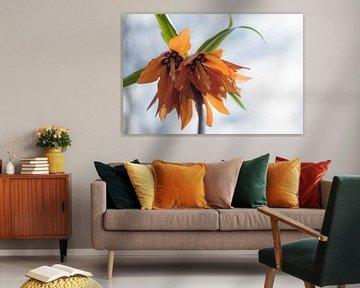 Orange Fritillaria von Lisette van Gameren
