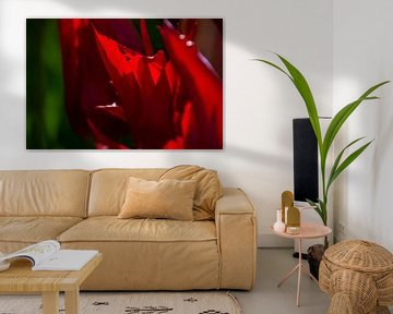 Rote Tulpen Nahaufnahme von Margreet Frowijn