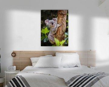 Koala von Rob Boon