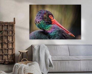 Storch von Rob Boon