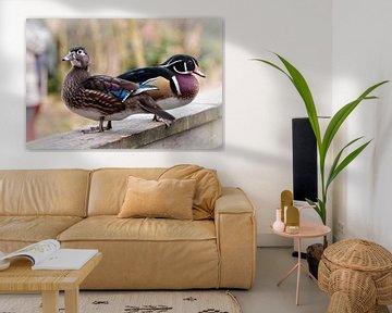 Enten von Rob Boon