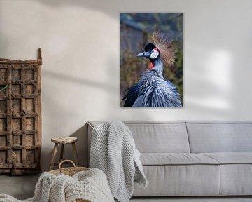 Schöner großer afrikanischer Vogel in blau-roten Tönen in einer goldenen Krone Schwarzer Kronenkrani von Michael Semenov