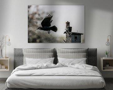 Zwarte Kraai van Ronny Struyf