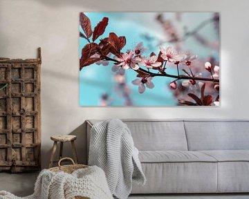Plum Blossom van Steffen Gierok