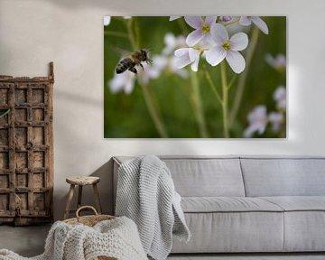 Biene im Flug von RedRoseFotografie