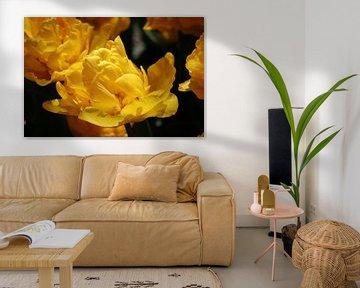 Gelbe Tulpe von Gabrielle van Rhenen