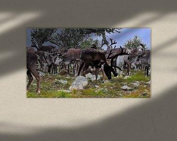 Weißes Kalb, das in eine Herde wilder Rentiere blickt - Gemälde von Schildersatelier van der Ven