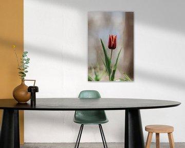 Tulpe von Tessa Dommerholt