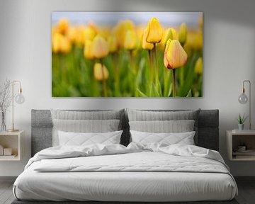 Geel - rode tulpen in de lente