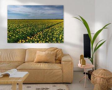 Tulipes sur Texel - Code jaune