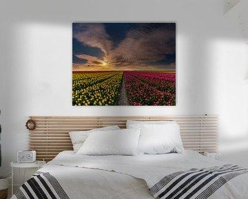 Tulpen op Texel - Mixed groot