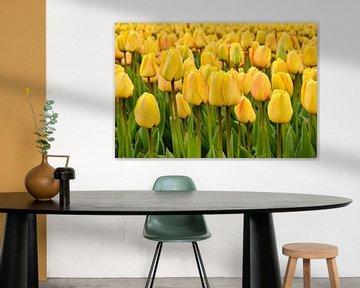 Close-up van gele tulpen
