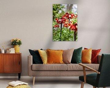 Keizerskroon  Fritillaria imperialis van Lindy Schenk-Smit