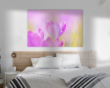 Krokus in zarten Pastellfarben von KB Design & Photography (Karen Brouwer)