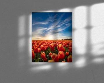Zonsondergang in een tulpenveld - Sommelsdijk Zeeland van Joris Bax